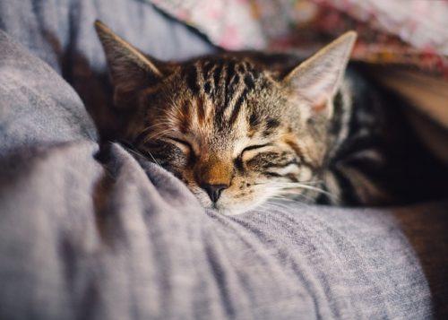 cat-4189697_640